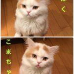 単発ブログ243画像