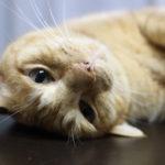 cat_matukun 2